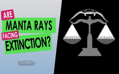 Are Manta Rays Facing Extinction?