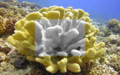 Coral Bleaching in Hawaii