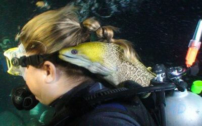 Frank, the cherished moray eel