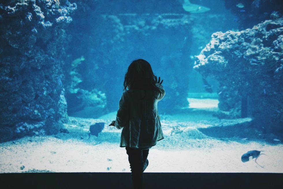 Ocean conservancy for kids: young girl looking at aquarium